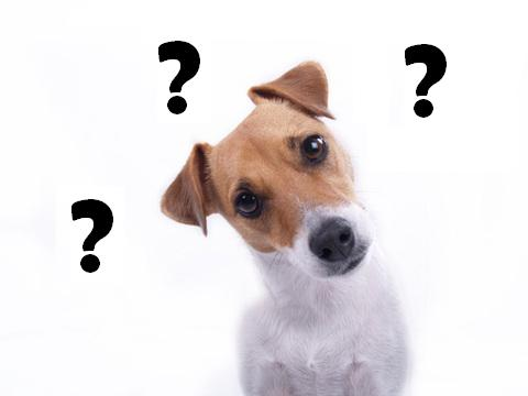dog_question-mark